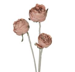 Natu virág 02