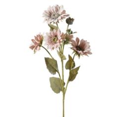 Natu virág 04