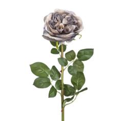 Rose virág