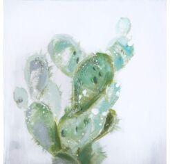 Cactus 03 kép